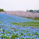 【2020】この春カップルで行きたい!日本全県おすすめデートスポット47選