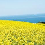 一足早く春気分を満喫!これから見頃の「花絶景」9選【関西・中四国】