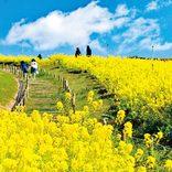 デートで行きたい「花絶景」ドライブコースおすすめ8選【関西・中国・四国】