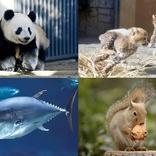 上野動物園など都立動物園・水族園、2月24日に無料開放 天皇陛下在位30年記念