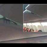 ライオン・エア機内の荷物棚からサソリ 乗客ら恐怖に慄く(インドネシア)<動画あり>