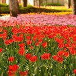 【横浜】春のおすすめデートスポット22選!カップルでお出かけしたい場所まとめ