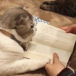 読書の邪魔…でも癒される! 愛嬌たっぷりの猫ちゃんのしぐさに胸キュン