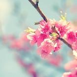 【3月27日は何の日…!?】お花見がしたくなる…さくらの日!