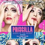 山崎育三郎主演、ドラァグクイーンミュージカルの傑作「プリシラ」をいま観るべき理由