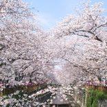 目黒川の桜が見頃!花見とセットで楽しめる「話題のグルメスポット」5選【中目黒】