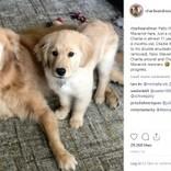 盲目の老犬をそばで支える生後4か月の仔犬 「2頭はいつも一緒」(米)