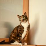 超控えめな外猫が「飼い猫」になるまでの、ほのぼのストーリー♡