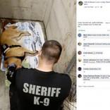 ヤマアラシに200本の針毛を食らった警察犬 指名手配犯を追跡中に(米)