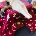「人生相談したい」の声が殺到! リビングで休む猫を撮影した『1枚』が話題