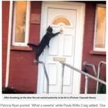 玄関のドアをノックする礼儀正しいネコ(英)<動画あり>