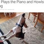 """ピアノを弾いて歌う犬""""バディ・マーキュリー"""" フレディに負けないパフォーマンス(米)<動画あり>"""