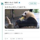 """パンダが""""たけのこ""""を豪快に食べる姿に「カプリコ食べてるみたい」「たけのこの里(パンダ編)」の声"""