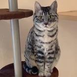 「クオリティ高すぎる」「信じられない」 約8万人が『いいね』した猫の正体とは