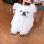 小型犬が『ある動物の赤ちゃん』に変身? シュールな姿にじわる人続出