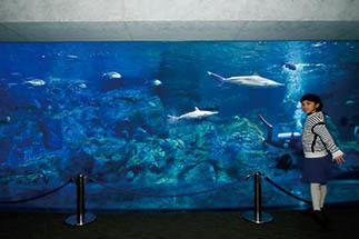 大分マリーンパレス水族館「うみたまご」