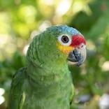 【6月15日は何の日…!?】鳥たちの幸せを願って、オウムとインコの日!