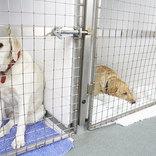 アマゾンの『動物支援』が斬新! 施設を支援し、動物たちに幸せな生活を提供