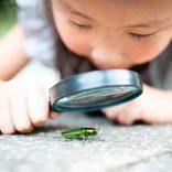「虫だけ生活」井上咲楽は珍しくない? 昆虫を食べた経験を聞いてみると…