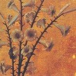 孤高の詩人、清春の原点!! 黒夢のデビュー作、その妖しい魅力
