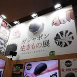 """ますます広がる『だんごむし』ユニバース! 開発中の虫たちを集めたバンダイの""""ガシャポン生きもの展"""":東京おもちゃショー2019"""