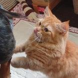 犬の心の広さ、はんぱねぇっ! 爪切り中、背後の猫がとった行動に腹筋崩壊