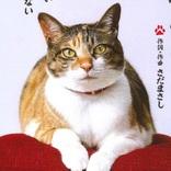 ACジャパンのCM「にゃんぱく宣言」がとてもイイと話題 / 作詞作曲はさだまさしさん