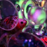今年も「アートアクアリウム」開催! 水・光・金魚の織りなす幻想的な世界に心奪われる