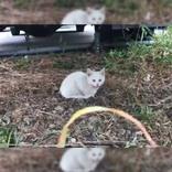 トラックの下にいた1匹の子猫 気になって奥をのぞくと…?