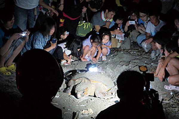 ウミガメ産卵観察会