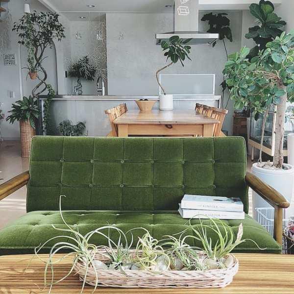 グリーンいっぱいの癒しあふれるお部屋4