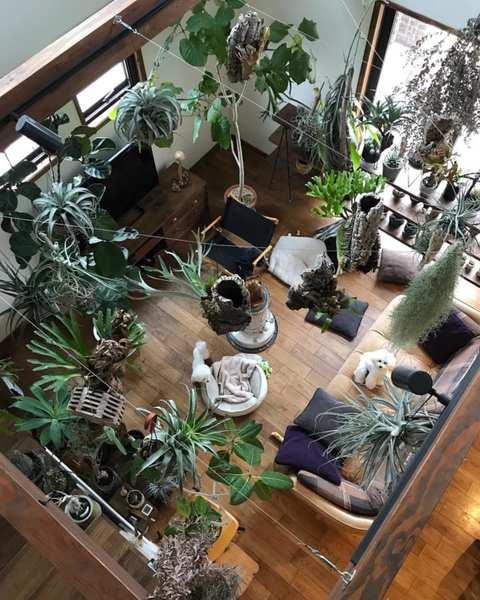 グリーンいっぱいの癒しあふれるお部屋5