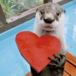 行って良かった!東海の「動物園&水族館ランキングTOP10」2019夏のイベント情報も
