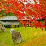 【関西】秋に行きたい絶景スポットおすすめ26選!紅葉が美しい寺やコスモス畑など