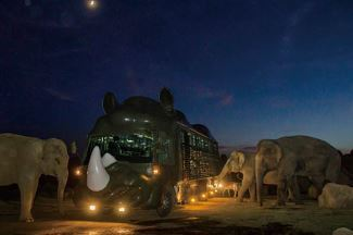 九州自然動物公園 アフリカンサファリ「ナイトサファリ」