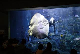 大分マリーンパレス水族館「ダイバーの餌付けショー」