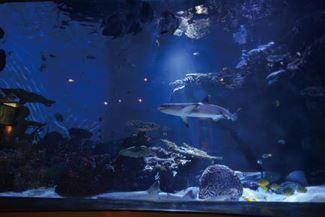 夜の水族館、トワイライトアクアリウム