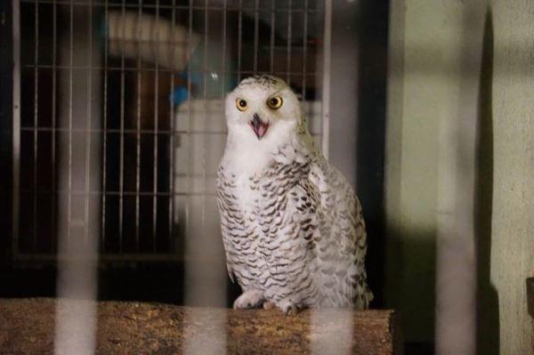 福岡市動植物園「夜の動植物園」