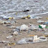 海辺でゴミ拾いをしていたのは有名俳優 その姿に「本物のセレブ」