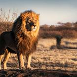 ライオンの糞が、列車事故を防ぐ!?【鉄道トリビア】