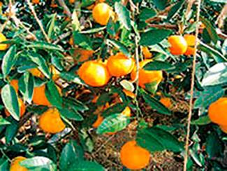 淡路島フルーツ農園