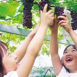 【2019秋】関西・中四国のクチコミ絶賛「果物狩り」23選。9・10月におすすめ