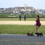進む「犬税」の導入 歩道の清掃や排泄物の浄化処理費用に充当