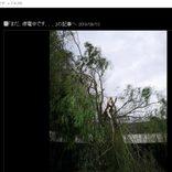 佐藤藍子、千葉の自宅に倒木 台風の生々しい爪痕に「言葉が出ない」