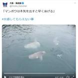 「マンボウは本気を出すと早く泳げる」 イメージ覆す海遊館のツイートが大反響