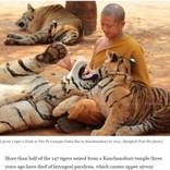 トラ86頭、タイの寺院から保護された後に死ぬ ストレス原因か
