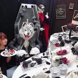 ハロウィンはゴースト達とパーティー♪ヒルトン東京ベイで「デザートビュッフェ」開催