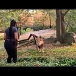動物園で柵を乗り越え、ライオンの目の前でダンスする女性に非難殺到(米)<動画あり>