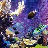 こんな展示もあり?多彩なコンセプトで楽しめる「水族館」入場者ランキング