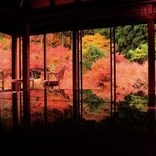 九州の秋絶景21選!感動の穴場紅葉や一面のコスモス畑もおすすめ<2019>